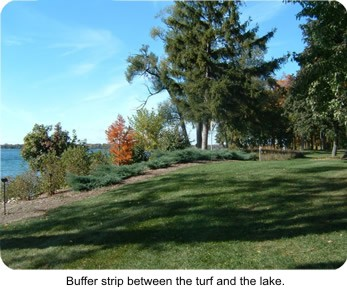 Photo Buffer Strip between turf and the lake